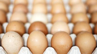 식용란 공급 농가 검사 강화...농식품부 가축전염병예방법 시행규칙 개정