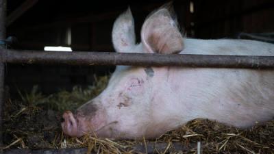 25일부터, 돼지에게 남은 음식물 주면 안돼요