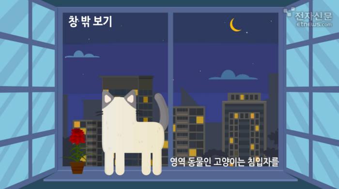 [모션그래픽]알 수 없는 고양이의 행동?