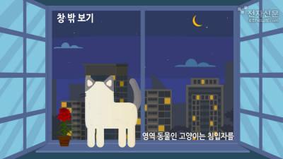 알 수 없는 고양이의 행동?