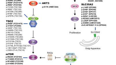 KAIST, 난치성 뇌전증의 새로운 유전자 진단법 개발