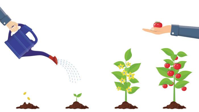 [모션그래픽]토마토의 놀라운 효능