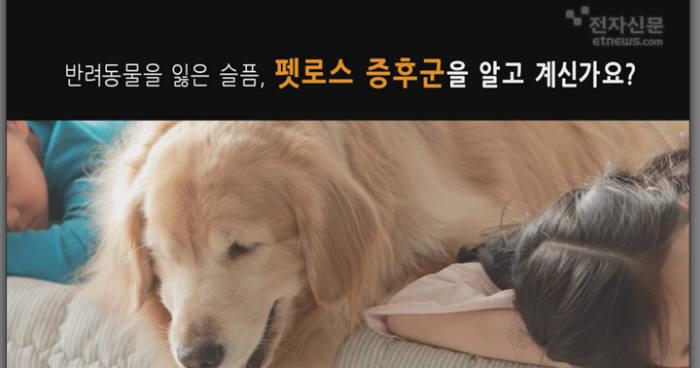 [모션그래픽]반려동물을 잃은 슬픔, 펫로스 증후군을 알고 계신가요?