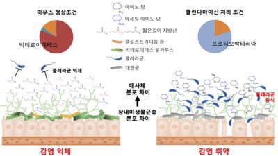{htmlspecialchars(콜레라균 억제 미생물, 생 쥐 장속서 찾았다)}