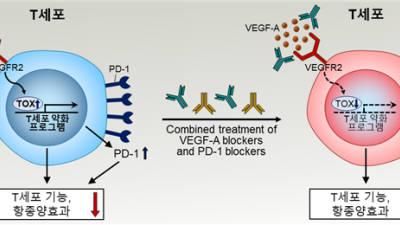 {htmlspecialchars(KAIST·연세대, 암세포 면역세포 억제 핵심원리 규명)}