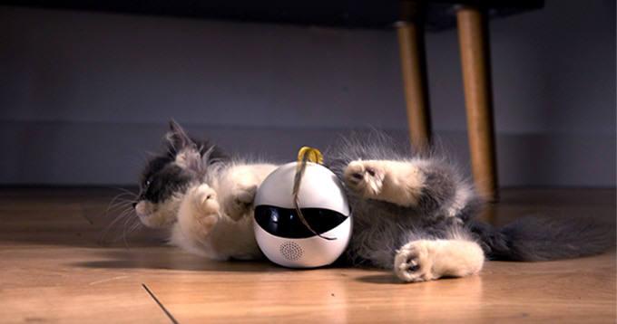 에보(Ebo)는 고양이의 사냥 본능을 일깨우는 데 특화된 로봇이다. [사진=킥스타터]