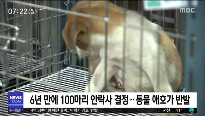 천안시 유기동물 보호센터는 보호중인 유기동물 100마리를 안락사하려다 동물 애호가들의 반발에 부딪혔다. [사진=MBC]