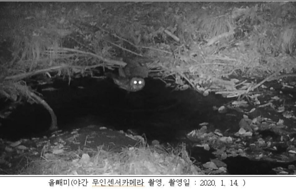 가야산에서 멸종위기 구렁이·올빼미 등 3종 발견
