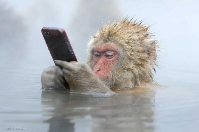 원숭이가 온천욕 즐기면서 아이폰을…