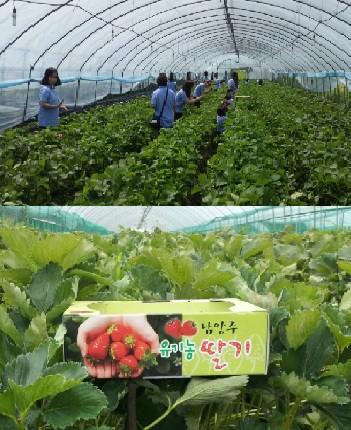 도심 속 아이들을 위한 살아있는 딸기체험농장