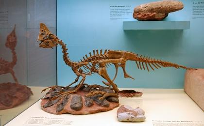 6천600만년 전 살았던 깃털달린 공룡 오비랩터(Heyuannia huangi·허위안니아 후앙아이,사진)가 파란색 알을 낳았던 것으로 밝혀졌다.이는 공룡이 색깔있는 알을 낳았다는 사실을 밝혀낸 최초의 사례다. 사진=위키미디아
