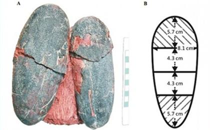 6천600만년 전 살았던 깃털달린 공룡 오비랩터(Heyuannia huangi·허위안니아 후앙아이,사진)가 낳은 파란색 알 화석. 사진=피어 J 저널