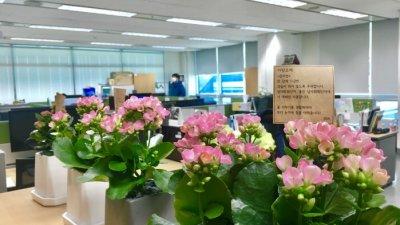 SBA, '사무실 꽃 생활화' 캠페인 참여…화훼소비 촉진 기여