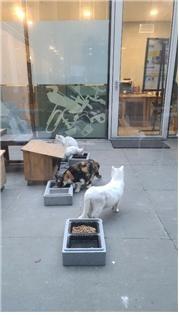 현재 10여 마리의 길고양이가 밥을 먹고 화장실을 이용하며, 일광욕을 즐기는 등 공존 하고 있다