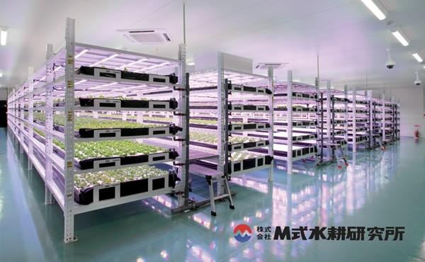 일본 M식수경연구소 식물공장 내부