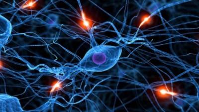 신경 네트워크 연결 실시간 조절한다...KAIST 신경 칩 플랫폼 개발