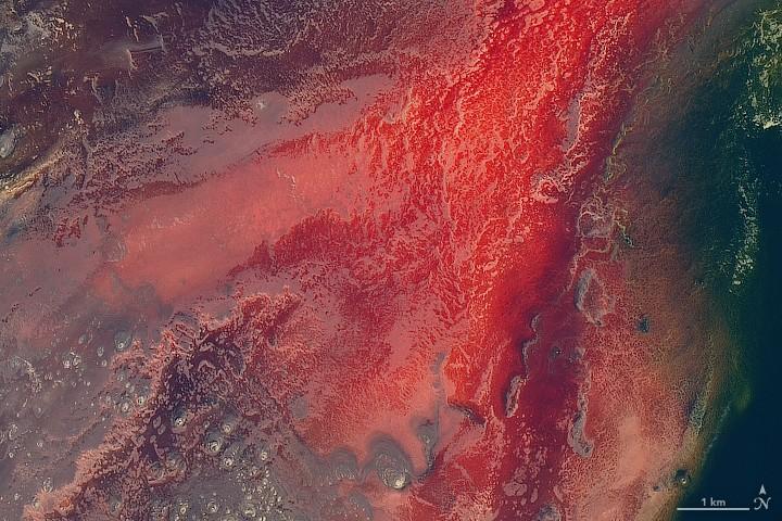 탄자니아 북부의 나트론 호수(Lake Natron, Tanzania). 사진=NASA Earth Observatory