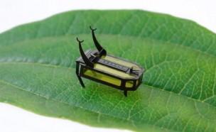 '알코올'로 움직이는 곤충 로봇
