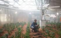 화성 환경에서 감자 재배 실험