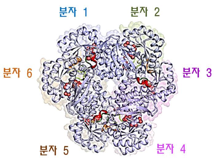 인간 QPRT 6량체의 3차원 구조.QPRT는 두 분자 사이에 활성부위를 갖는 2량체가 기본 단위이며 하나의 알파-나선과 두 고리에 의해 6량체를 형성한다.
