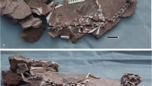깃털 몸통에 부리·볏 가진 공룡 발견