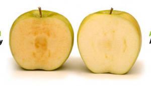 3주동안 색이 변하지 않는 `GM사과`…美서 2월부터 판매
