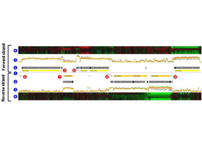 산업 대장균의 신규 유전자 규명 및 전사체 맵 완성 과정