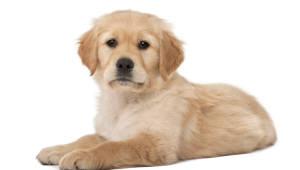 개도 표정이 있다?