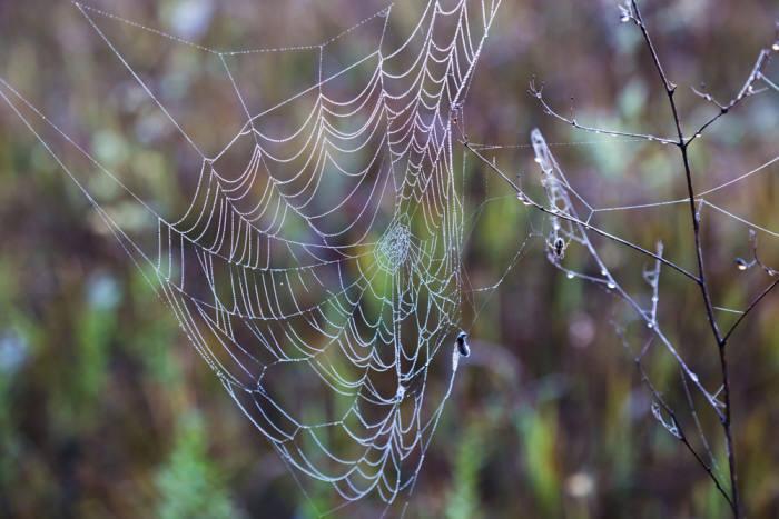 사진1. 거미줄은 강철보다 강하고 고무보다 유연해 과학자들에게 꿈의 천연섬유로 불린다. 출처: Shutterstock