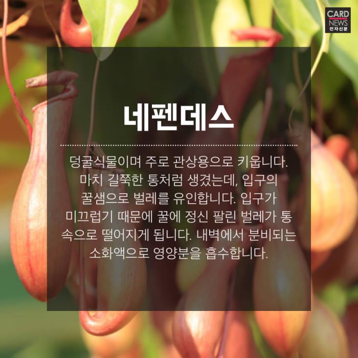 [카드뉴스] 날 '풀'로 보지마, 벌레잡는 식물