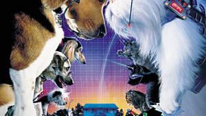 개와 고양이의 두뇌싸움 '캣츠앤독스'
