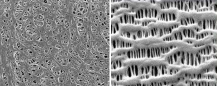 전자현미경으로 본 습식분리막(왼쪽)과 건식분리막(오른쪽)의 결정 구조 <사진=유에스티>