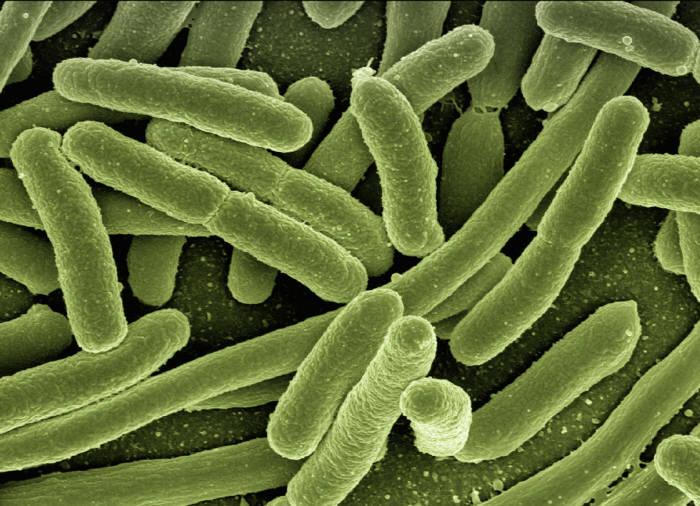 사진1. 이대목동병원에서 발생한 비극의 원인은 병원 내 세균 감염인 것으로 기울고 있다.