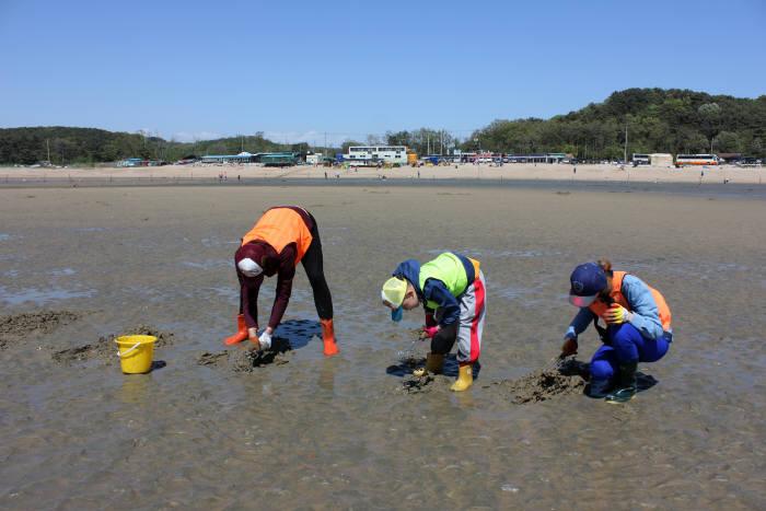 마시란해변 갯벌체험