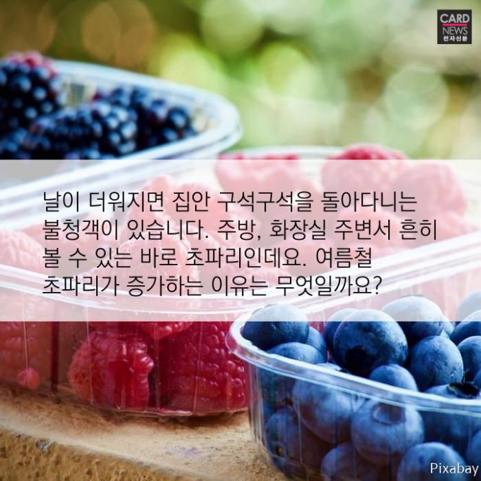 [카드뉴스]여름 불청객 '초파리' 퇴치법