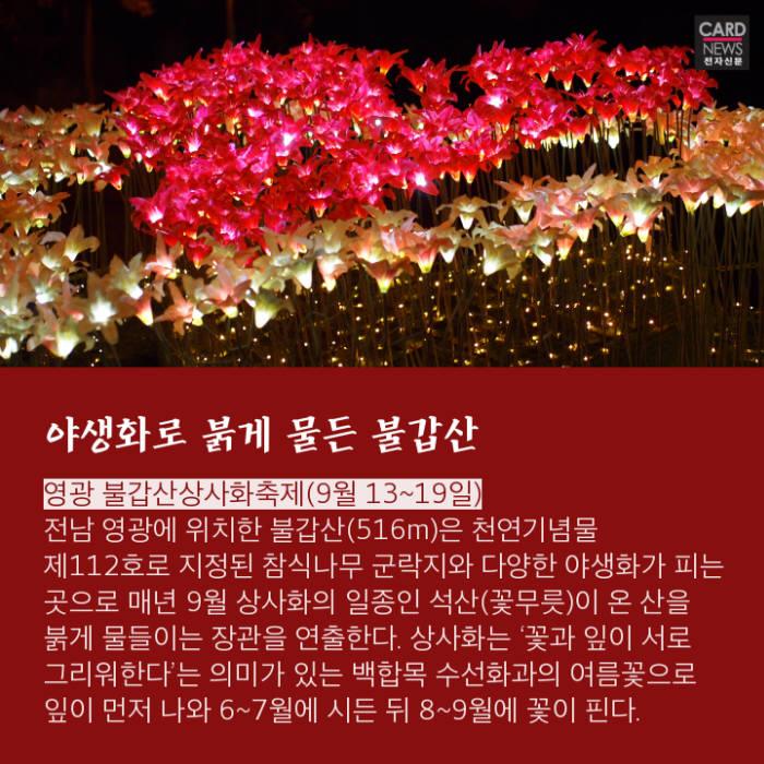 [카드뉴스]가을, 즐길 준비 되셨나요? 가볼만한 가을 축제 7선