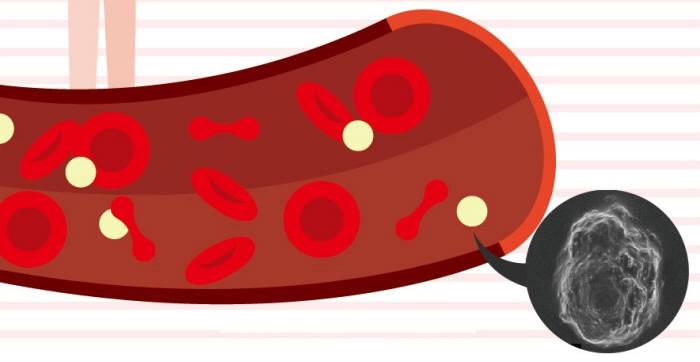혈관 속 적혈구와 나노코팅된 면역세포.