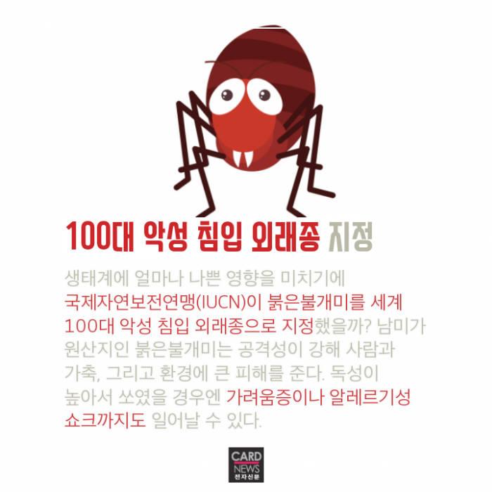 [카드뉴스]붉은불개미 잡아라