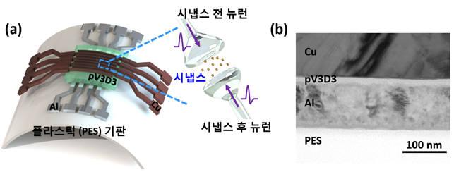 플라스틱 기판 위에 제작된 유연 멤리스터 시냅스 소자 모식도