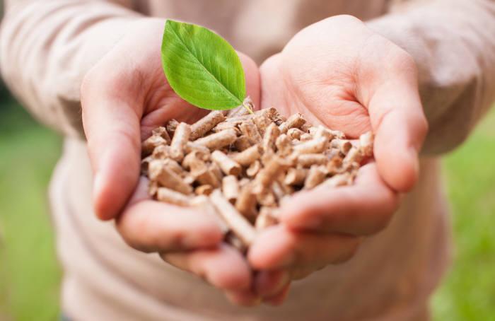 바이오매스 에너지는 재생에너지로 주목 받고 있지만, 목재를 이용한 바이오에너지는 오히려 환경에 도움이 되지 않는다는 의견도 있다. (출처: shutterstock)