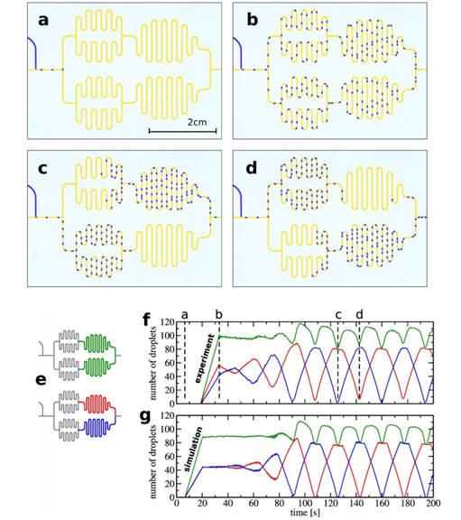 미세유체 네트워크 실험과 관련 시뮬레이션 테스트