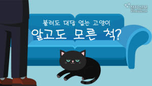 불러도 대답 없는 고양이, 알고도 모른 척?