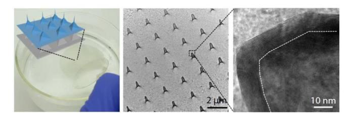 입체 돌기 형태 멤브레인 반도체 모식도와 전자현미경 이미지