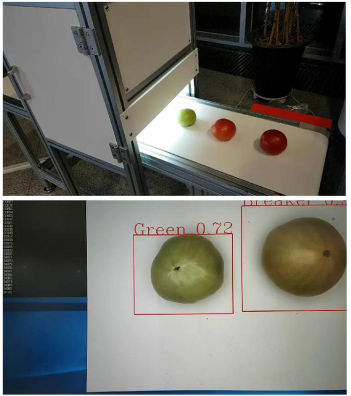 토마토 숙도 판별 과정과 이를 통해 얻은 결과값 모습