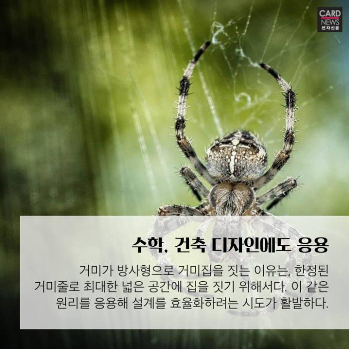 [카드뉴스]거미의 능력은 무궁무진…현실에서도 연구 활발