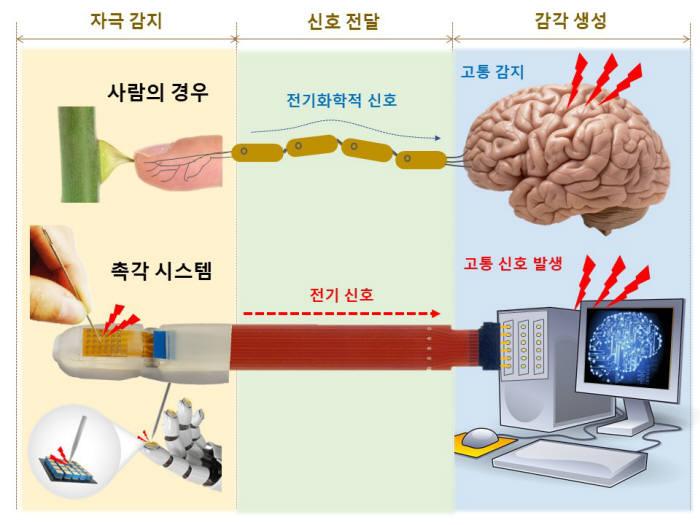 촉각의 고통신호 생성을 모방한 인공센서및 신호처리 기반 인공 고통 신호 생성 모식도