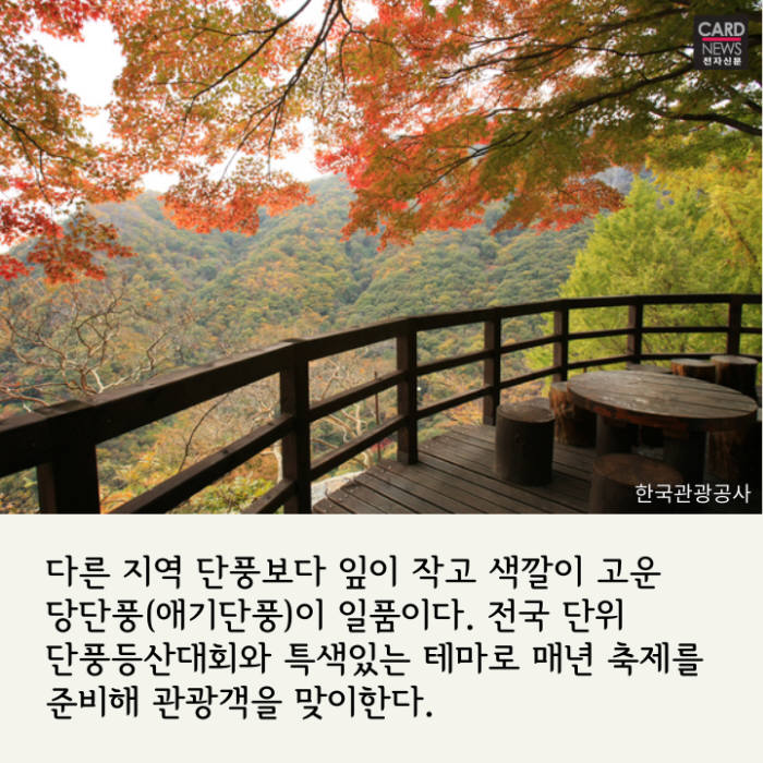 [카드뉴스]알록달록 가을, 축제로 즐겨요