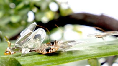 파리채로 쳐도 끄떡없는 '곤충 로봇' 개발