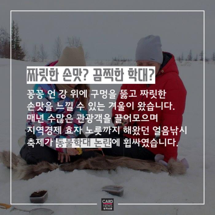 [카드뉴스]얼음낚시 축제 동물학대 논란
