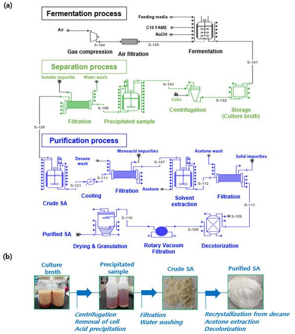 미생물 배양을 통해 얻은 세바식산 분리 및 정제 공정 흐름, 실제 세바식산 모습